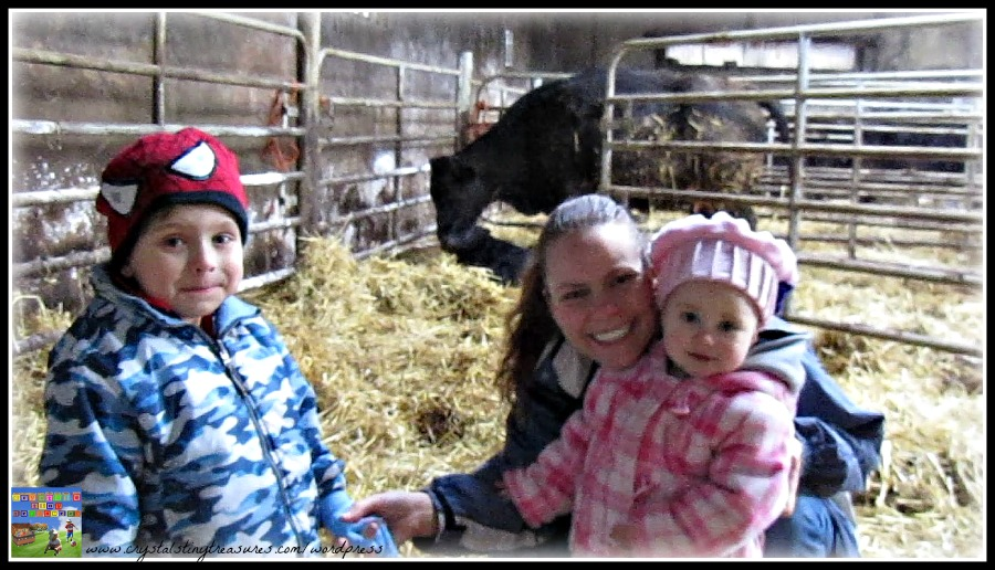 calving, barn, children, lifecycl,e family, photo
