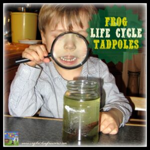 Frog Life Cycle 2 - Tadpoles