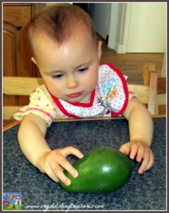 What is an avocado?, photo