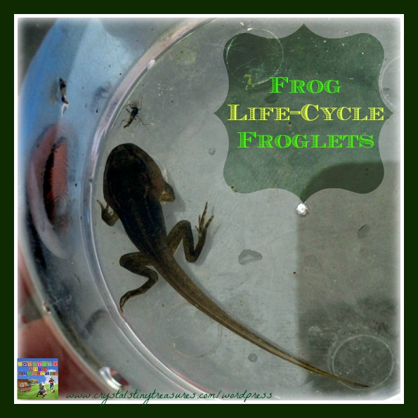 Frog Life Cycle 3 – Froglets