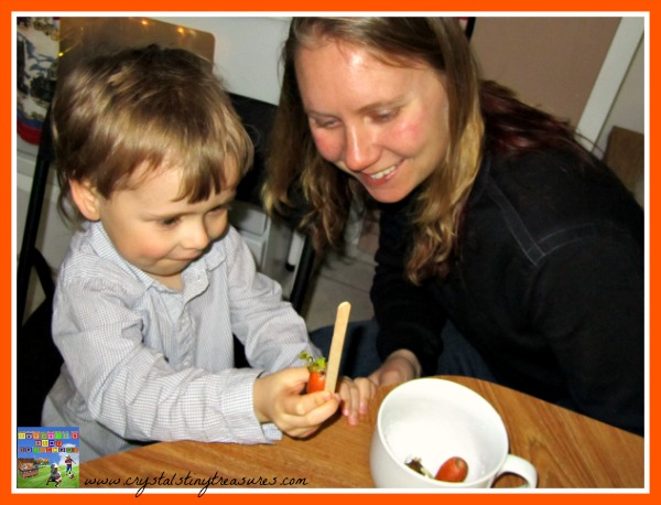 Garden science fun for kids, watching carrots grow, easy science experiments for kids, photo