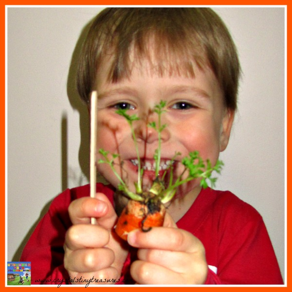 Measuring Carrot Tops, great science and math learning for young children, Crystal's Tiny Treasures Childminding, photo