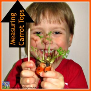 Measuring Carrot Tops, great science and math learning for young children