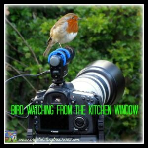 birdwatching in your backyard, birds and kids, bird knowledge, british garden birds, Irish birds, photo
