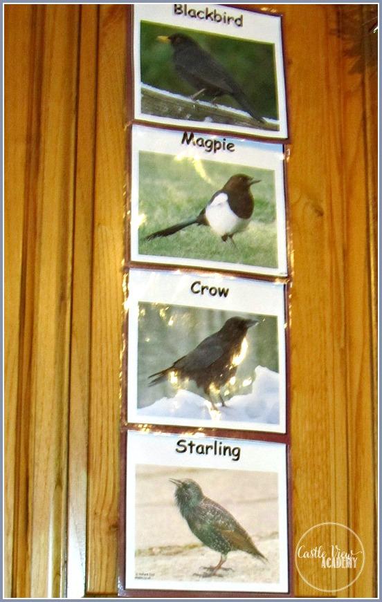 Birds we've seen in our garden today a