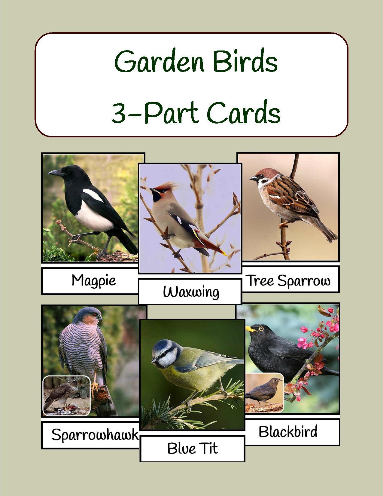 Garden Birds Cover