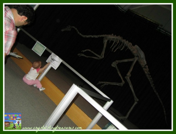 Larne museum dinosaur exhibit, photo