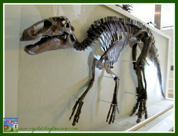 ulster museum, dinosaur exhibit, family day out in Belfast, photo