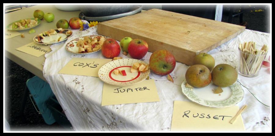 apples from Northern Ireland, apple varieties, apple taste-testing, local fruit varieties in Ireland, photo