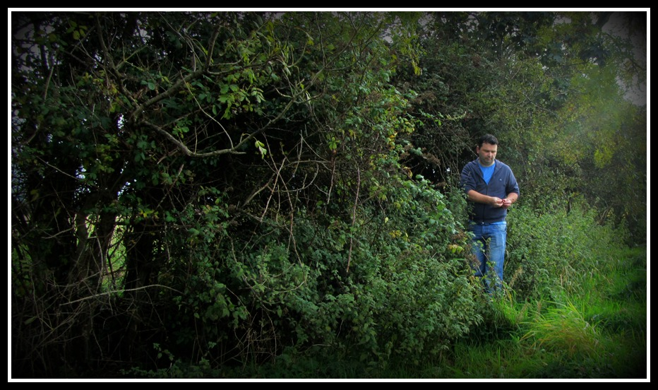 rosehip foraging, blackberry foraging, supper from the bushes, photo