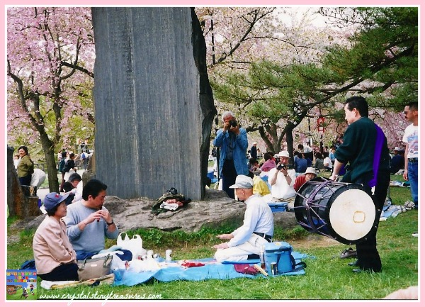 Cherry blossom viewing party in Japan, cultural celebrations, photo