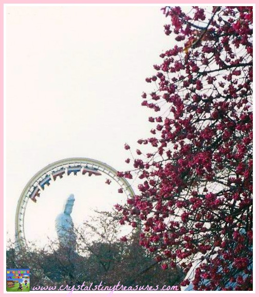 Takasaki hanami, cherry blossom viewing in Japan, photo
