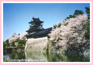 Toyama city cherry blossoms, sharing my background with my children, spring traditions, photo