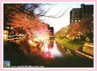 Hanami in Japan, Japanese celebrations, Japanese festivals, Spring festivals, photo