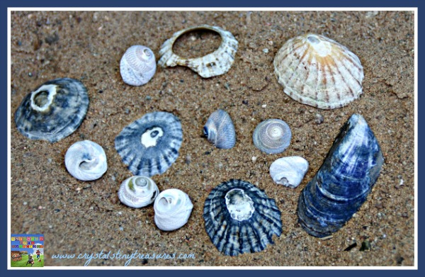 sea shell collection, summer crafts for kids, shell art, photo