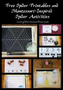 spider and spider web printables and activities