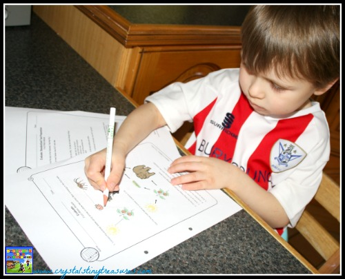 kindergarten science curriculum off-line worksheets, learning about science is fun, photo