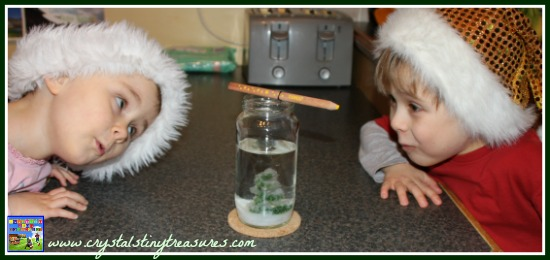 Borax crystal tree experiment