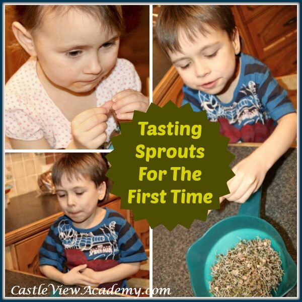 Tasting Sprouts For The First Time