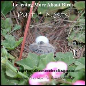 More-About-Birds-Nests