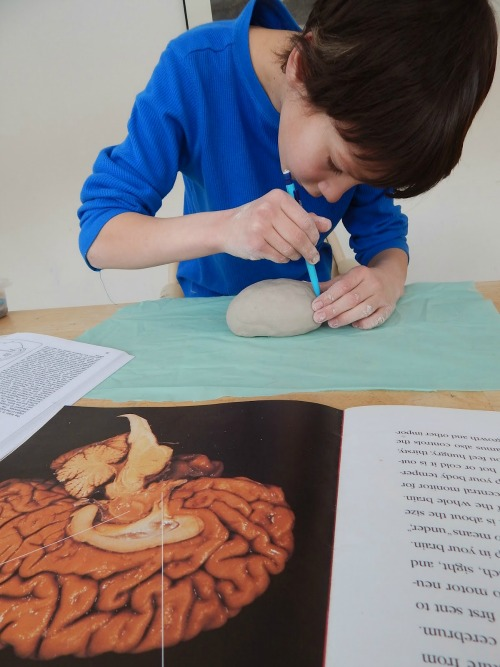 Human body resources for kids
