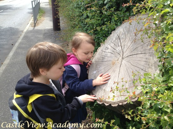 Counting tree rings is a good way to learn about the world