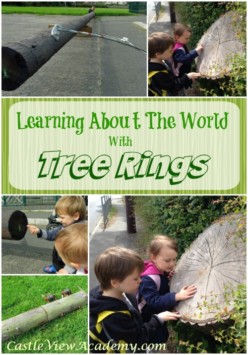 Learning About The World With Tree Rings. A fun way to learn during a summer walk.