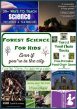 Forest Science For Kids (Even In The City)