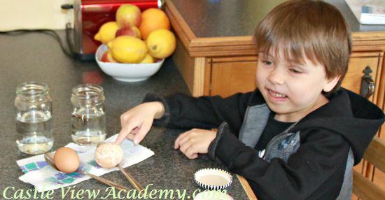 Dissolving eggshells science ideas for teachers