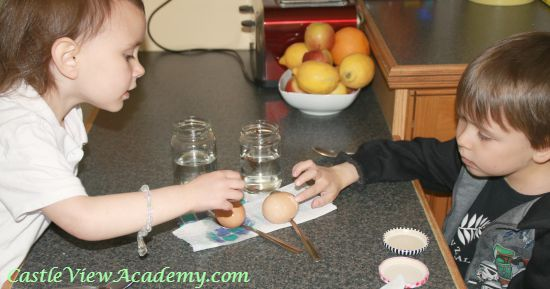 How are egg shells like teeth  Let's find out!