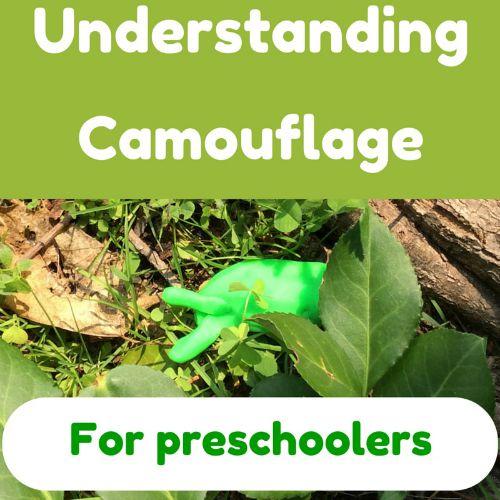 Understanding camouflage for preschoolers