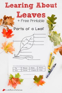 Exploring Leaves Activity and Printable for Kids_A Little Pinch of Perfect