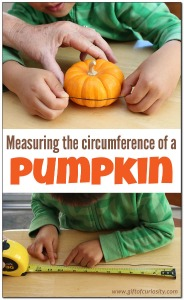 Measuring-the-circumference-of-a-pumpkin-Gift-of-Curiosity
