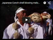 Japanese Conch shell