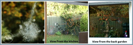 Prevent birds from flying into your windows with window markers CastleViewAcademy.com