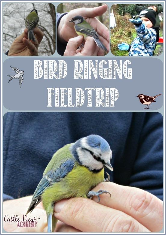 Bird Ringing Field Trip for the Big Garden Birdwatch with Castle View Academy