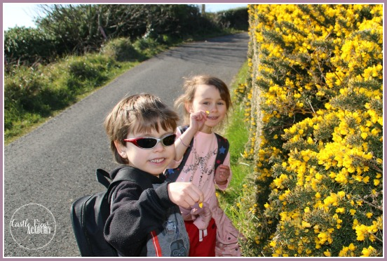 STopping to smell the gorse on a walk