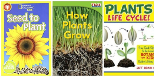 how plants grow, plant life cycles