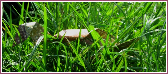 watch out for the origami python in the grass! Castle View Academy