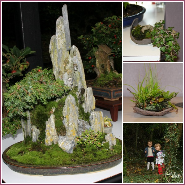 Northern Ireland Bonsai and Castle View Academy