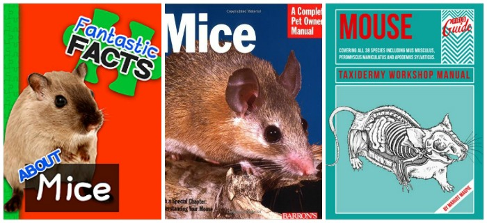 Facts about mice at Castle View Academy homeschool