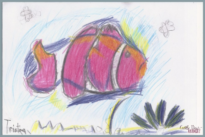Tropical Clown Fish in coloured pencil at Castle View Academy homeschool