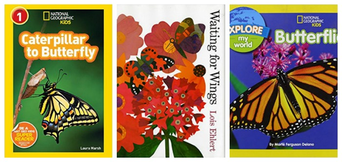 Butterfly life cycle books at Castle View Academy homeschool