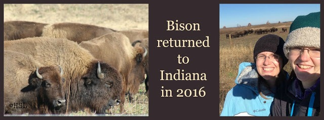 Bison return to Indiana