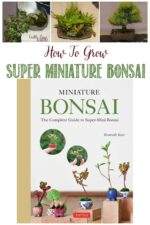 How To Grow Super Miniature Bonsai, a review by Castle View Academy homeschool