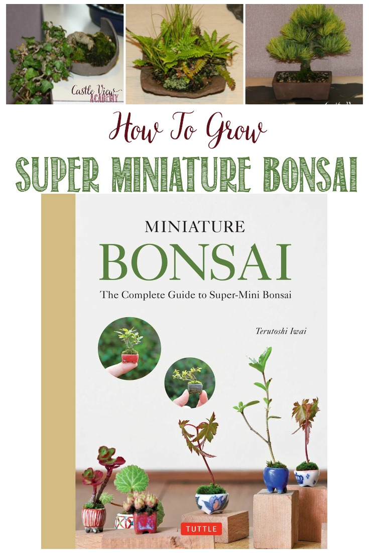 The life of a bonsai is quite fascinating, and I'm sure my gardening skills will bloom next spring after reading Miniature Bonsai: The Complete Guide to Super-Mini Bonsai by Terutoshi Iwai.