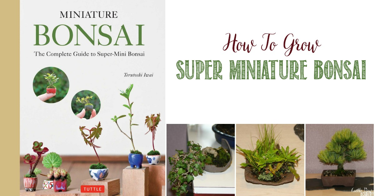 How To Grow Super Miniature Bonsai, a review by Castle View Academy