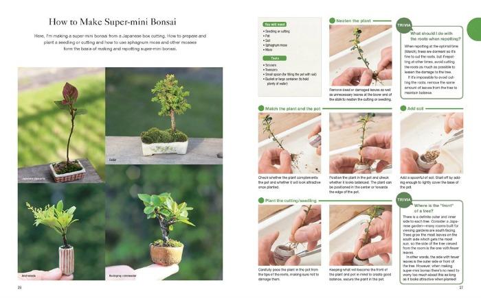 How to make super-mini bonsai