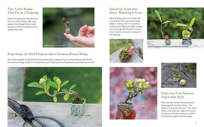 bonsai to fit on your fingertip