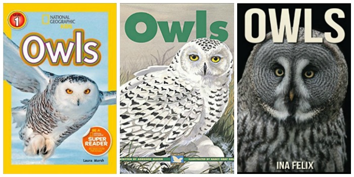 Owl books for kids at Castle View Academy homeschool